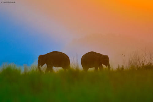 Colors of Himalaya