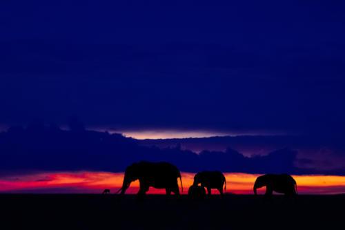 Magical Evening at Mara